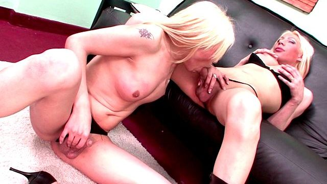 Candy Blonde Shemale Cuties Jimena And Victoria Slurping Their Huge Shafts